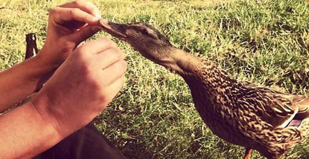 Christian Mäder füttert eine hungrige Ente