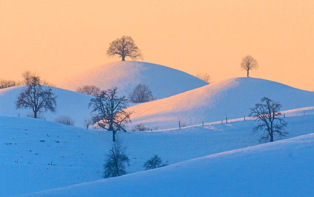 Am Hirzel, dem Pass zwischen Zürich und Zug, liegt das Gletschergeschiebe des Silgletscher in Form von Drumlin´s. Auf jedem Drumlin wird für die Stammhalter der dortigen Bauern ausschließlich ein Lindenbaum für den Stammhalter gepflanzt. Das zarte Winterlicht wird von der Abendsonne eingestrahlt. Friedrich Böhringer Schweiz, Hirzel