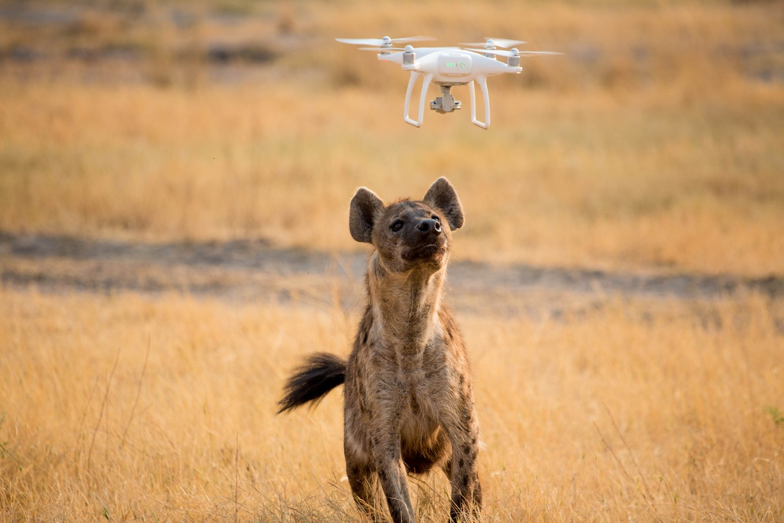 Drohnenvideo (c) Rhino Africa