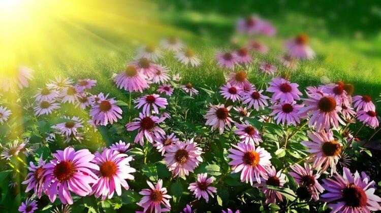 Die Auswirkung der Klimaveränderung auf unsere Natur & den Garten