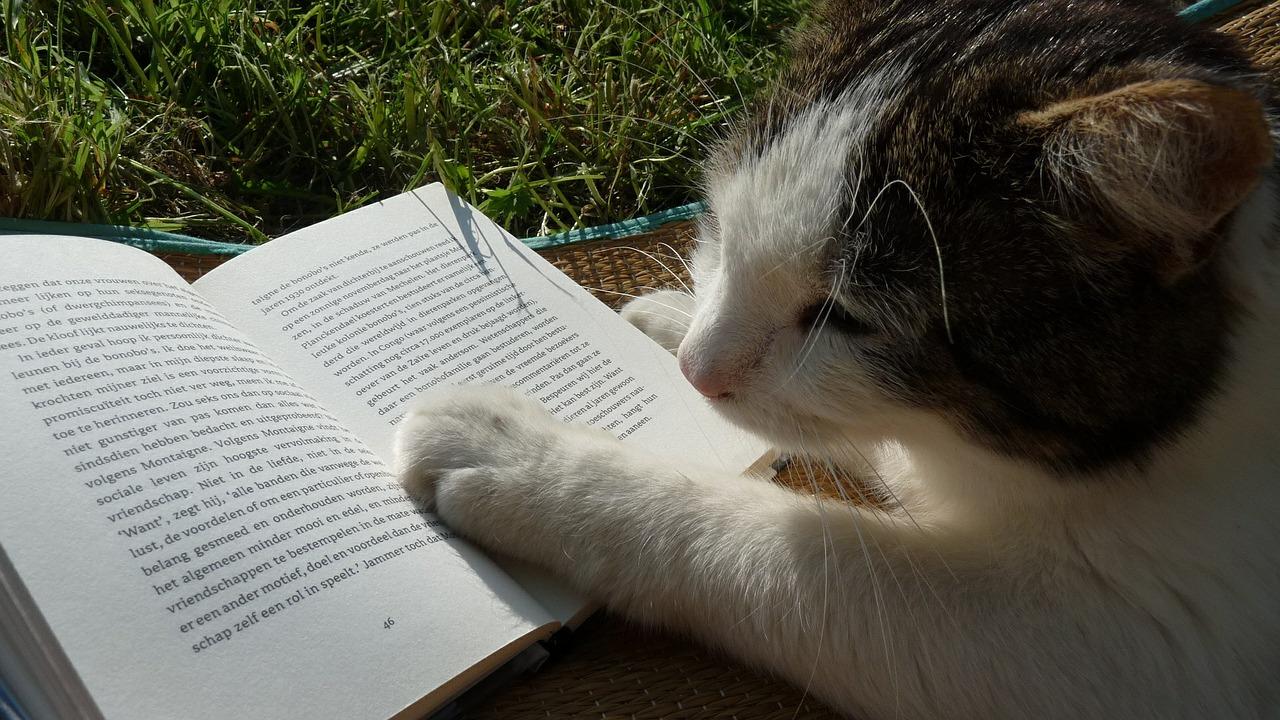Katze Buch